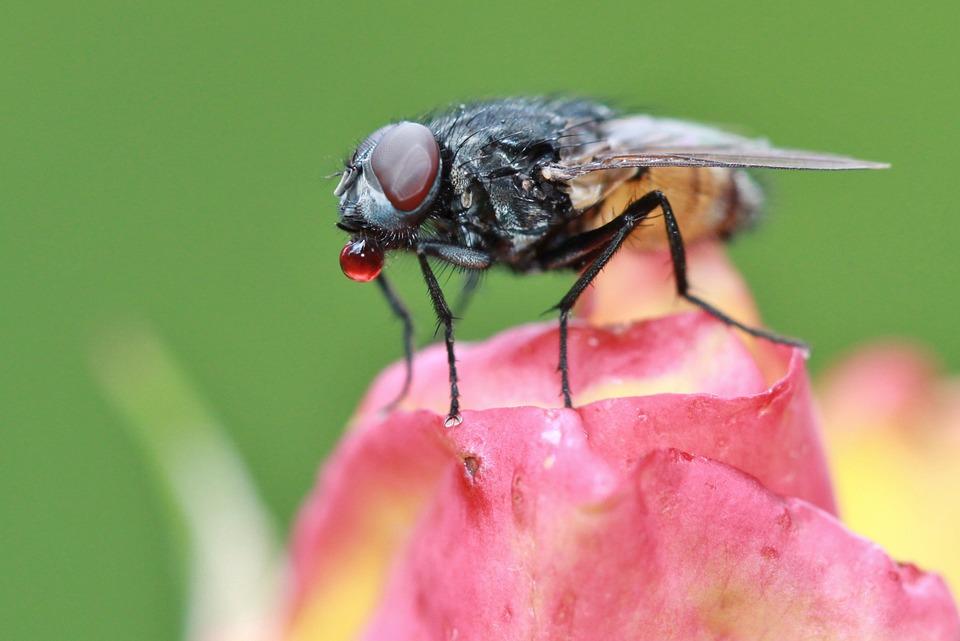 Fliegen bekämpfen und aus dem Haus vertreiben
