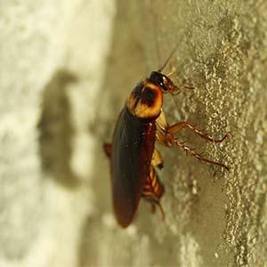 insekten bek mpfen ungeziefer ratgeber. Black Bedroom Furniture Sets. Home Design Ideas