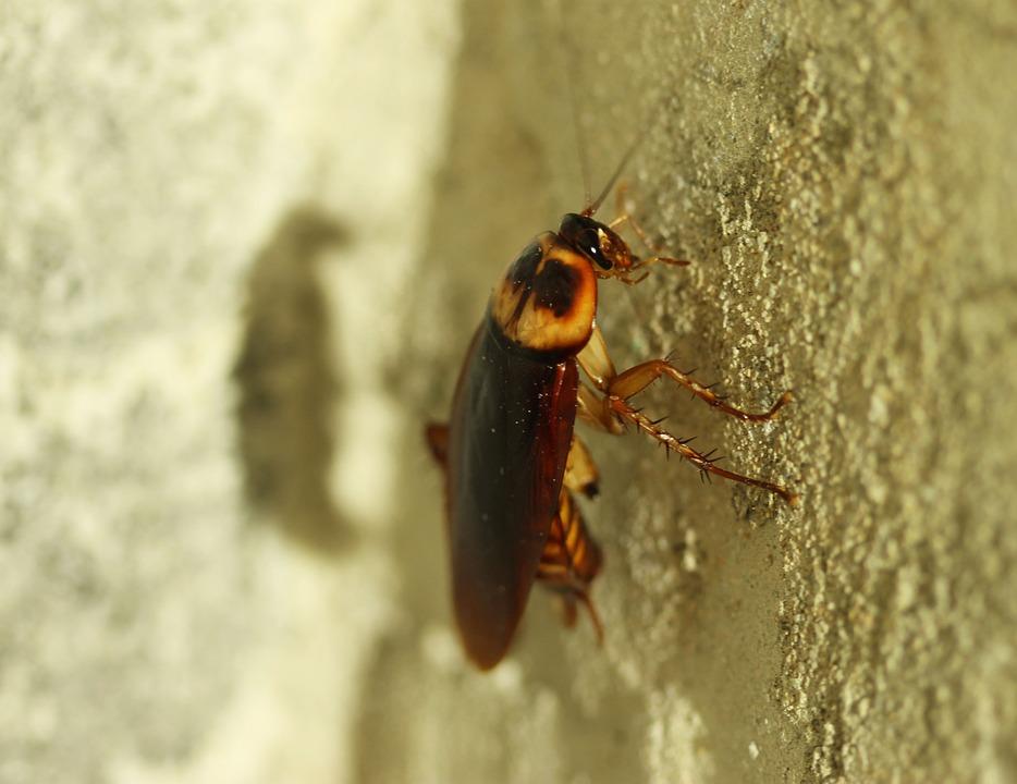 Kakerlake an Hauswand
