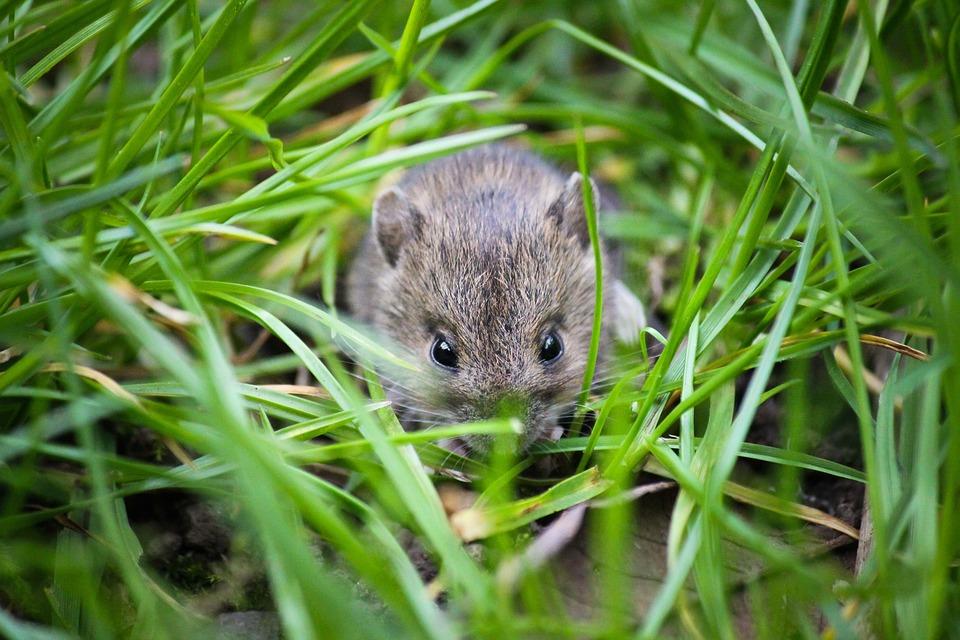 Mäuse Bekämpfen Und Vertreiben So Ist Aus Die Maus Im Haus