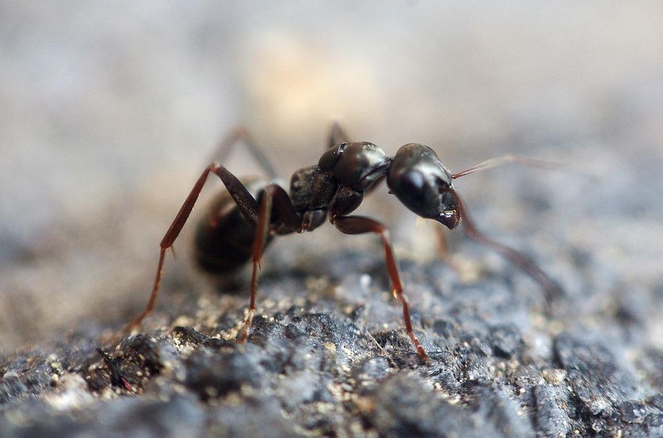 Ameisen bekämpfen – Welche Mittel gegen Ameisen helfen