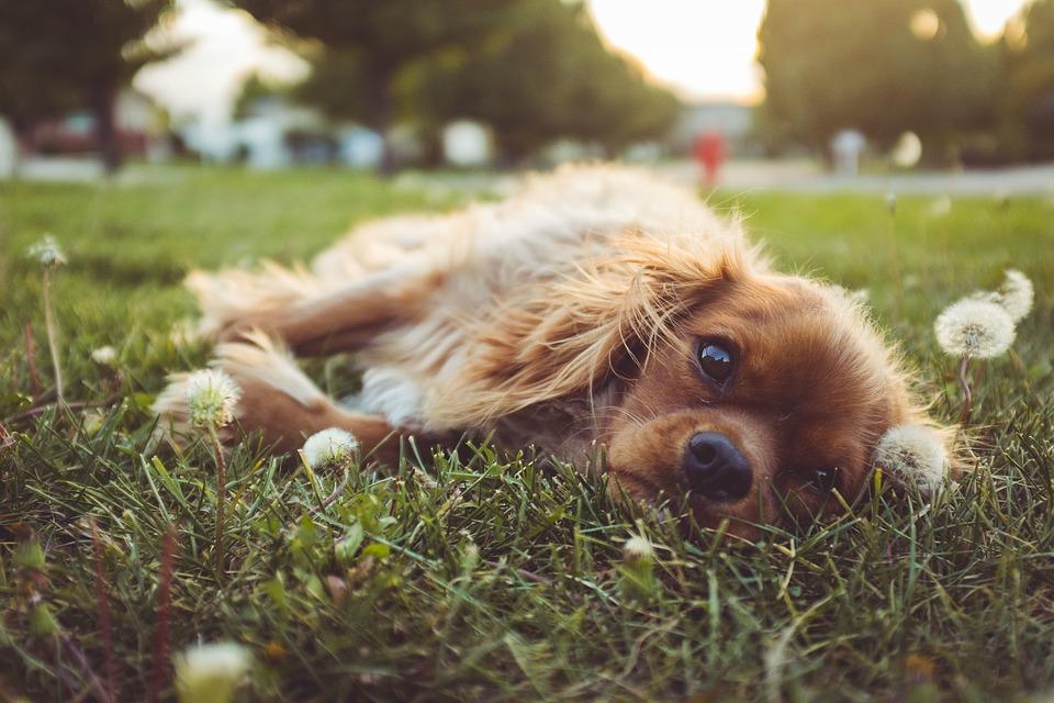 Grasmilben Beim Hund Behandeln Bekämpfen