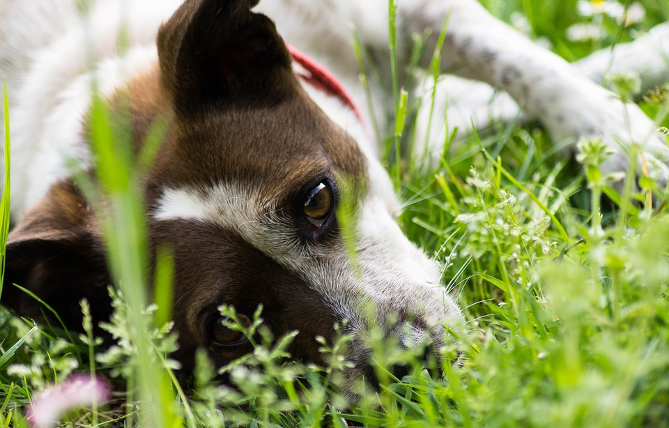 Ohrmilben Beim Hund Behandeln Mittel Gegen Milben Beim Hund