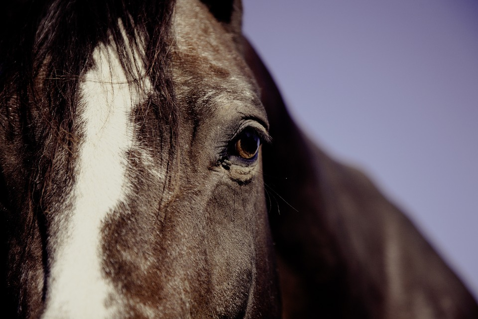 pferd-bremsen-abwehren