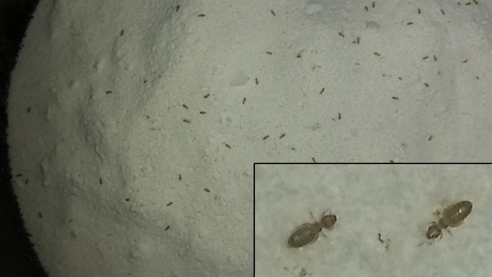Kleine käfer im bett