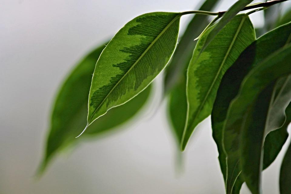 trauermuecken-an-zimmerpflanzen