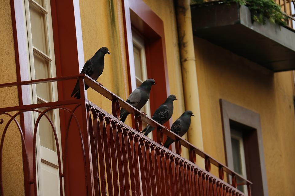 taubenschreck-vogelschreck-abwehr-balkon