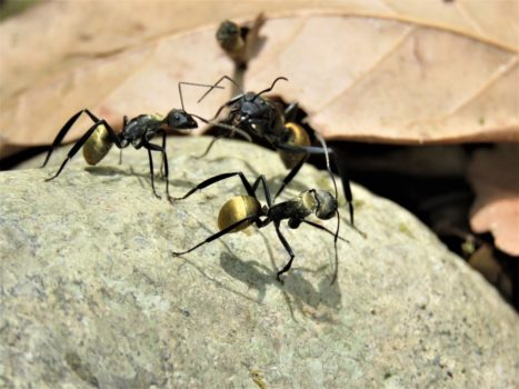 Ameisenbekaempfung im Haus