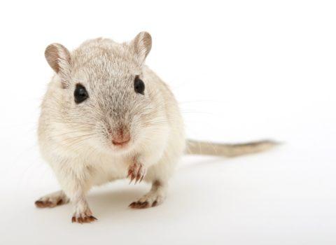 Koederboxen gegen Ratten und Maeuse
