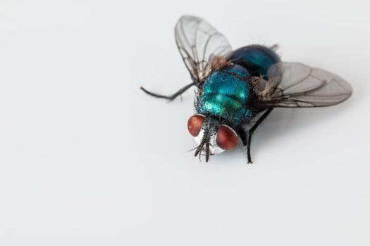 Snapy Insektenfaenger gegen Insekten