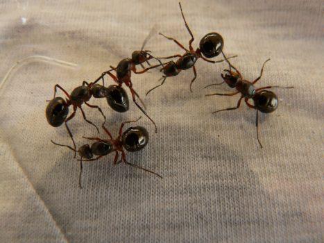 fallen und hausmittel gegen ameisen